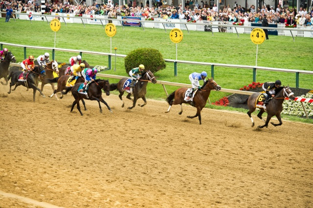 Finish of the 2013 Preakness Stakes